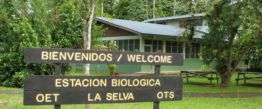 Working on water, forest, frogs at Estacion Biologica La Selva