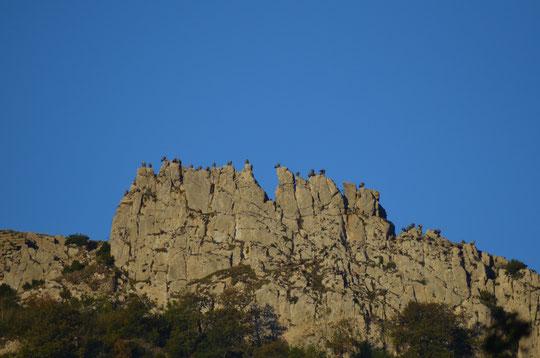 Vautours au château du Bézu