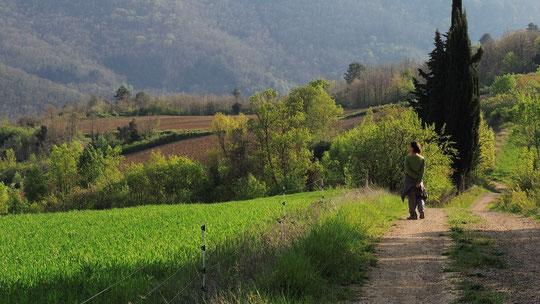 Sur un sentier de Cassaignes