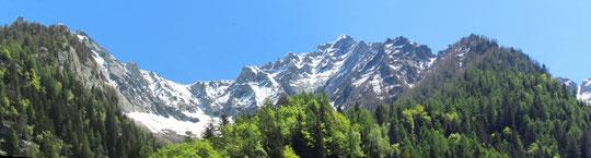 Dall'Alpe Bee