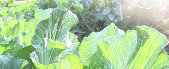 ★ りびえ旬野菜 LIVIE Seasonal Vegetables