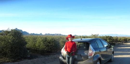 ♡ 新年にイーグルテールマウンテン環境区域側の山の麓のホホバプランテーションにて撮影。ちなみに今回の総走行距離カリフォルニア州~アリゾナ州間 2,317 miles (3,728 ㎞) ガソリン使用量 50.06 gallons (189.477 ℓ) ガソリン代合計 $129.61 (15,553円 1ドル120円計算) ハイブリッド車の燃費の良さにビックリです!