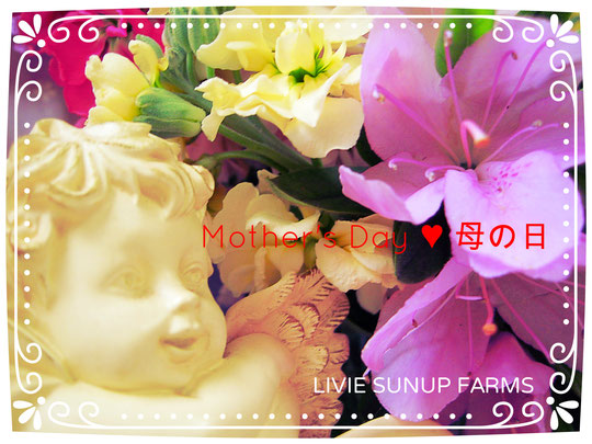 ♡ Mother's Day 母の日