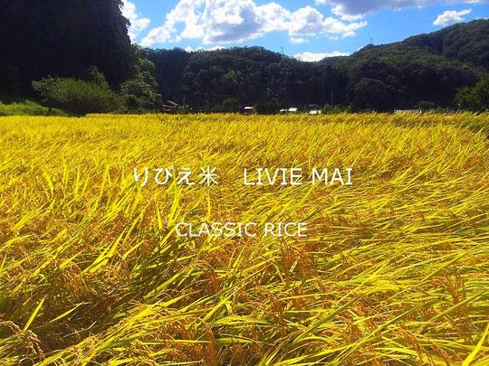 りびえ米 CLASSIC RICE LIVIE MAI 令和元年度産実りました。皆様のお陰で良質な御米が収穫できましたこと心より御礼申し上げます。