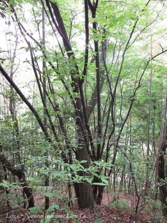 ♡ 森林浴