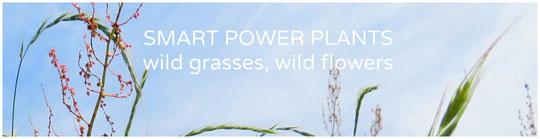 WILD GRASSES, WILD FLOWERS 野草花