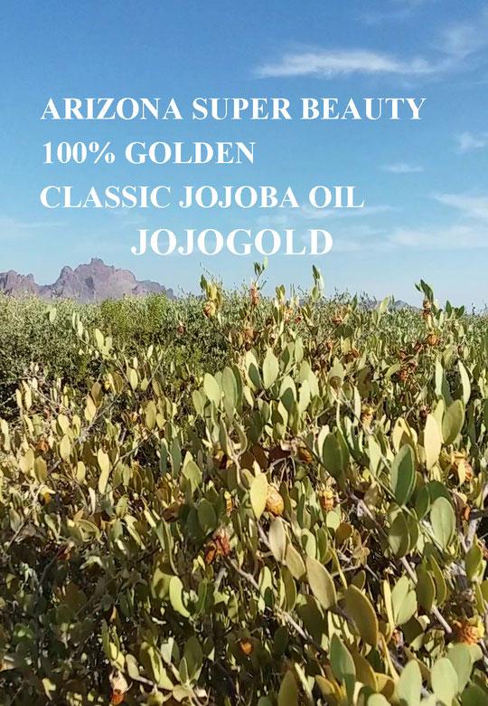 CLASSIC JOJOBA SEEDS ORIGINAL SPECIES 100% NATURAL SUPER BEAUTY GOLDEN JOJOBA OIL
