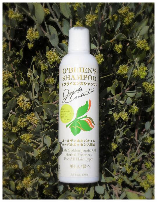 ♡ オブライエンズシャンプーと神秘の植物 原種ホホバ(純粋種Sayuri原種ホホバ 雄・King)