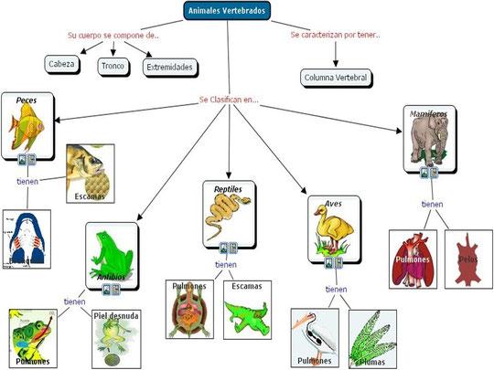 figura 1. clasificacion de los vertebrados