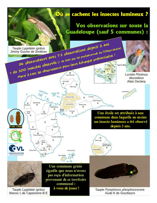 luciole insectes lumineux vers luisant bilan des observations 2021 guadeloupe