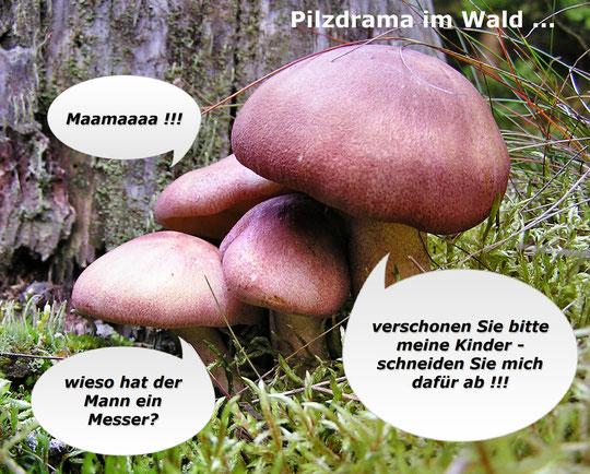 Spessart  - Pilze