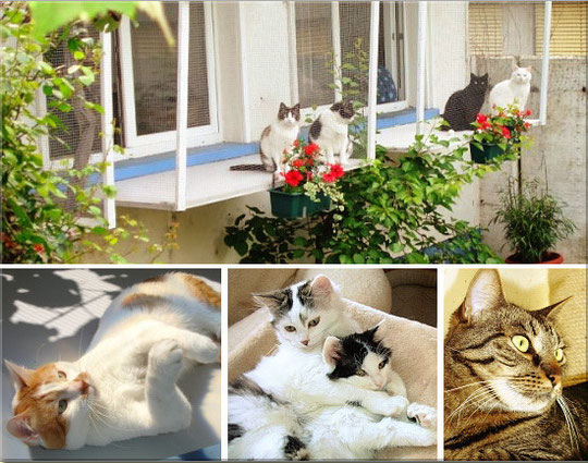 Katzenhotel Müsli in Allschwil bei Basel