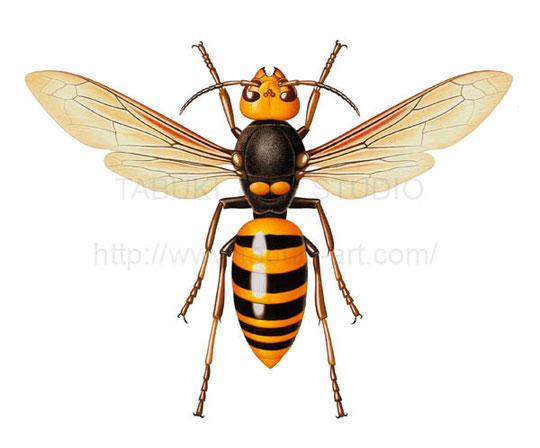 蜂 ハチ 細密イラスト
