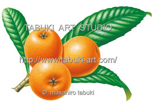びわ ビワ 枇杷 イラスト レンタル ストックイラスト 果物素材