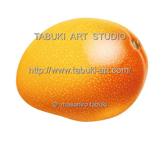 マンゴー イラスト mango トロピカルフルーツ 果物