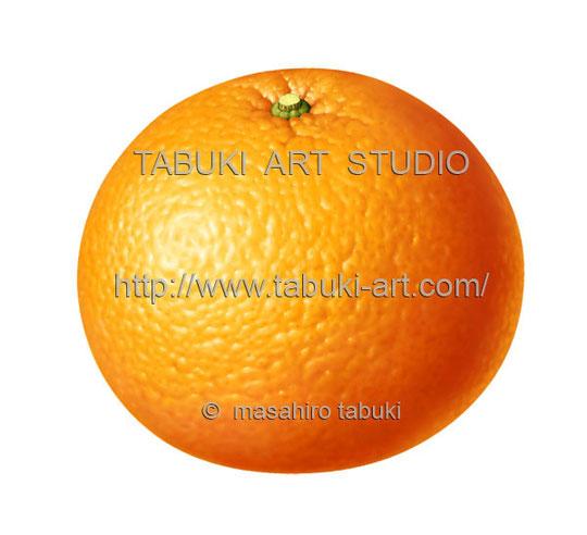 夏みかん 甘夏 サマーオレンジ イラスト ナツミカン 素材イラスト