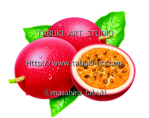 パッションフルーツ リアルイラスト 断面 シズル おいしい果物  フルーツイラスト fruit illustration