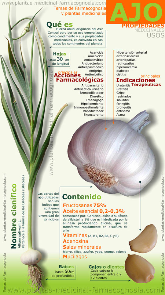 Propiedades y usos medicinales del ajo