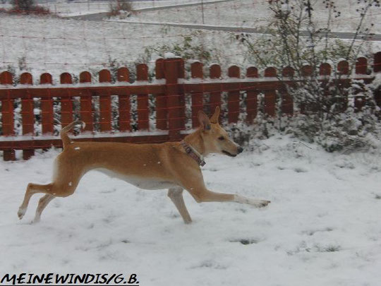 Meine Schneekönigin 2009