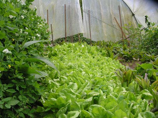 un lit de salades