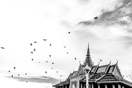 A flock of pigeons above the Royal Palace