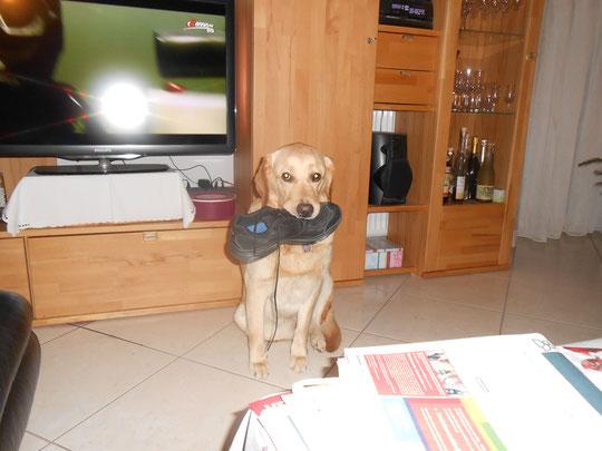 Schuhsuchhund Juna