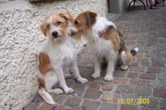 Finy & Irku-Jupi vom Postillon