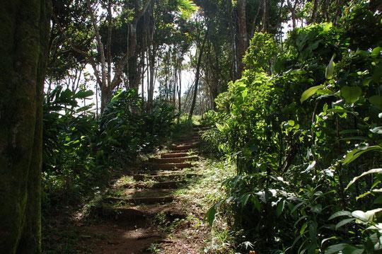 Trail im Hochland, quer durch den Rainforest.