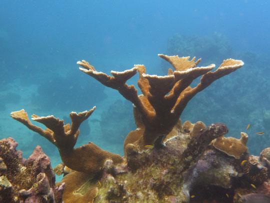Perfekt geschützt und für Yachtis sogar noch erschwinglich. Die Riffe um ST.LUCIA / Karibik