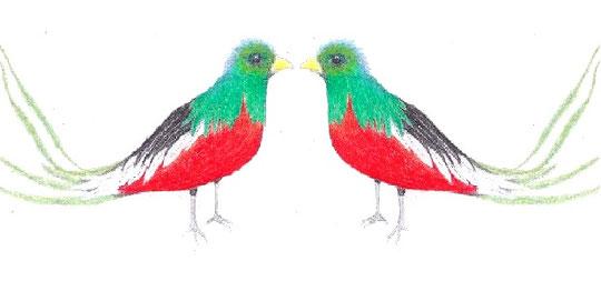 ein Märchenvogel aus Südamerika