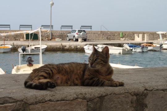 Das getigerte Katzenmädchen am Hafen.
