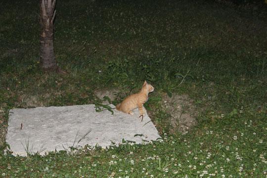 Die braune war für uns die beste Katzenmutter der Welt.
