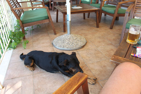 Es gibt auch Hunde in Kroatien, sind aber sehr selten.