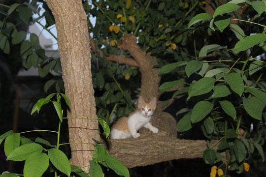 Ein Kroatisches Katzenbaby.