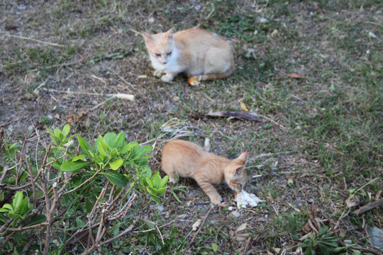 Unsere Katzenmutter mit ihrem Jungen.