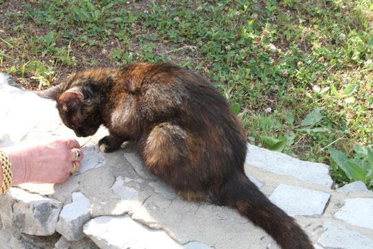 Das schwarzbraune Katzenmädchen.
