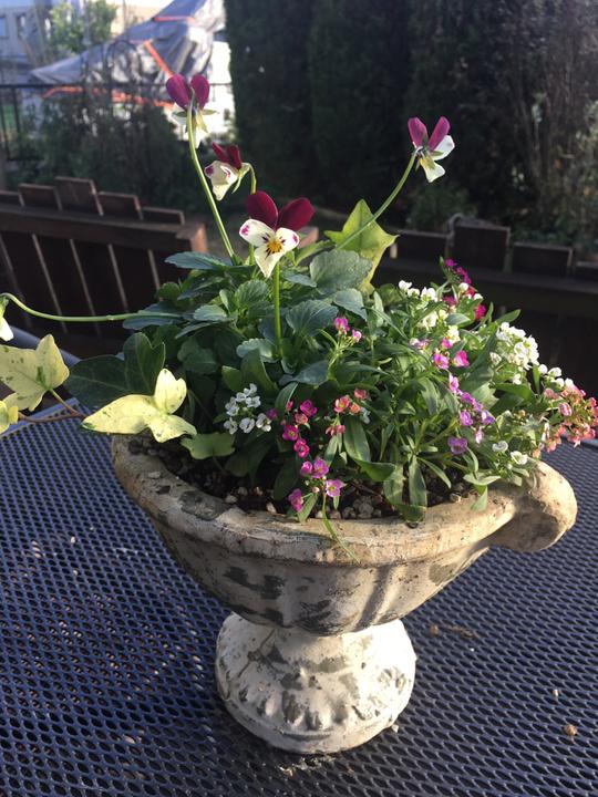 寒くても元気に可愛らしくお庭を彩ってくれています♪