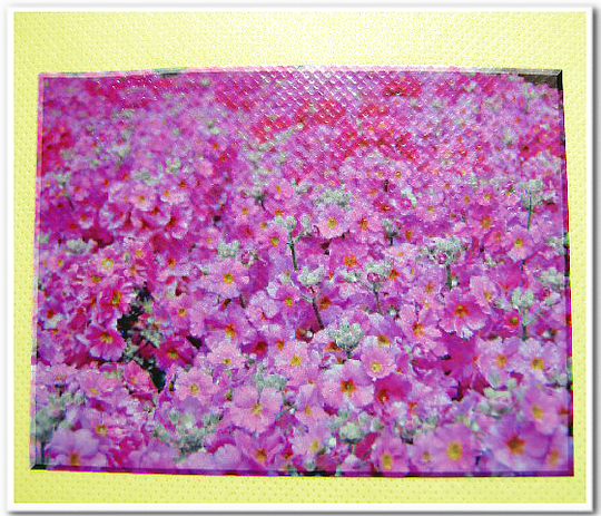 不織布バッグに写真の印刷:不織布クリームイエロー色に写真をインクジェット転写