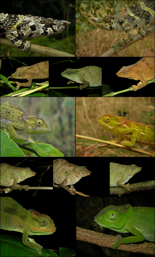 Chameleon collage to close the report in style.
