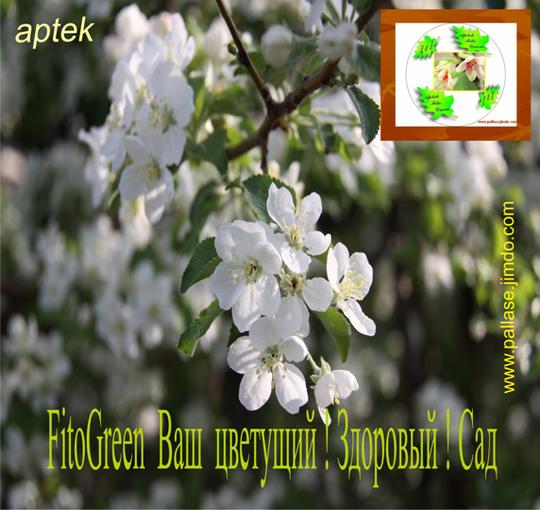 Aptek                FitoGreen            Ваш  цветущий ! Здоровый ! Сад    Защита декоративных деревьев, кустарников,      трав от фитопатогенного и антропогенного воздействия, подбор устойчивых в