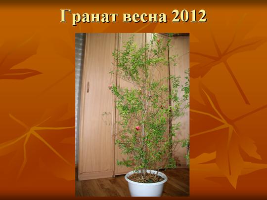 Гранат весна 2012