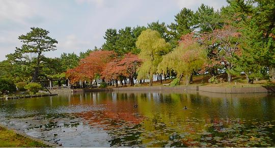 合浦公園にて (2017年10月撮影)