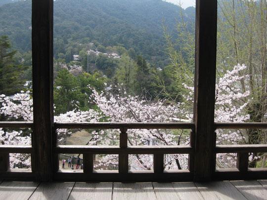 4月1日 「旅猿ツアー」 宮島でお花見