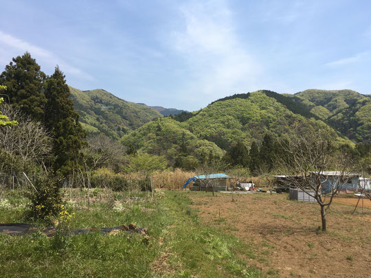 左が伴さんの畑。雑草がいっぱい。So much weeds on Ban-san's field (left)