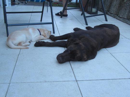 Ginger & Casey