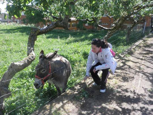 Disfrutando con los animales