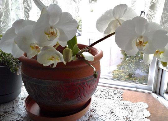 花の看護師