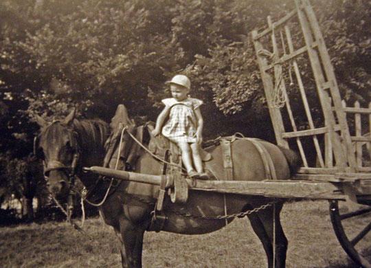 Enfant juché sur le cheval attelé à la charette (années 50)