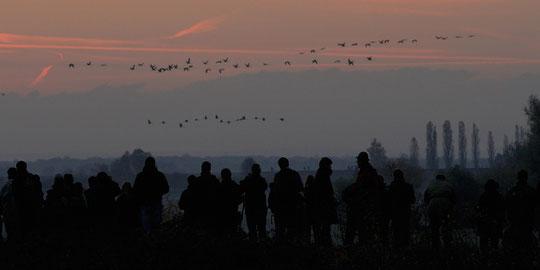 Il fait encore nuit, il fait froid, les passionnés de photo animalère sotn là avant le lever du soleil.