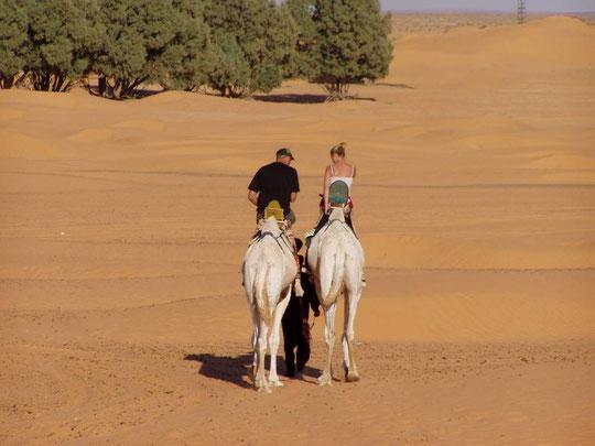 Wer sind denn die Kamele